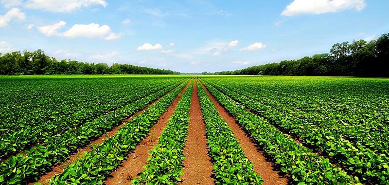 Como adotar o refúgio agrícola