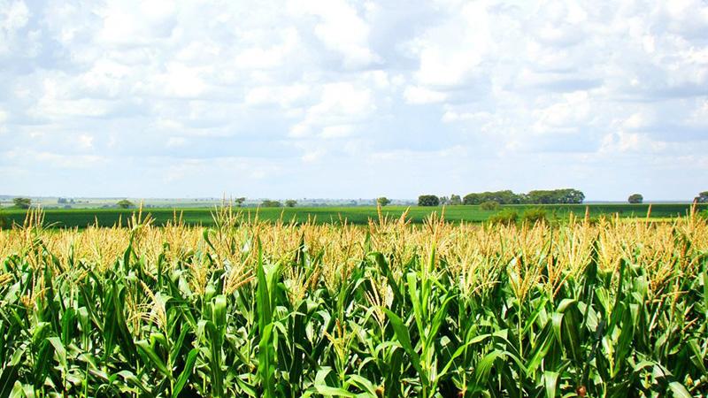 O que são adjuvantes agrícolas?