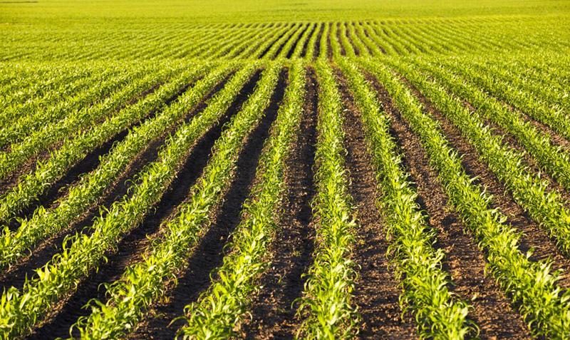 O que é um antiespumante agrícola?