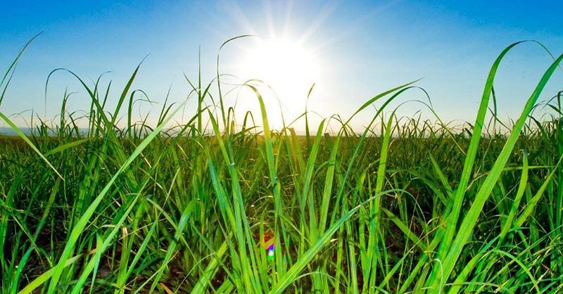 Produção de cana de açúcar tem cenário positivo em Goiás