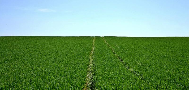 Mitos e verdades sobre os adjuvantes agrícolas