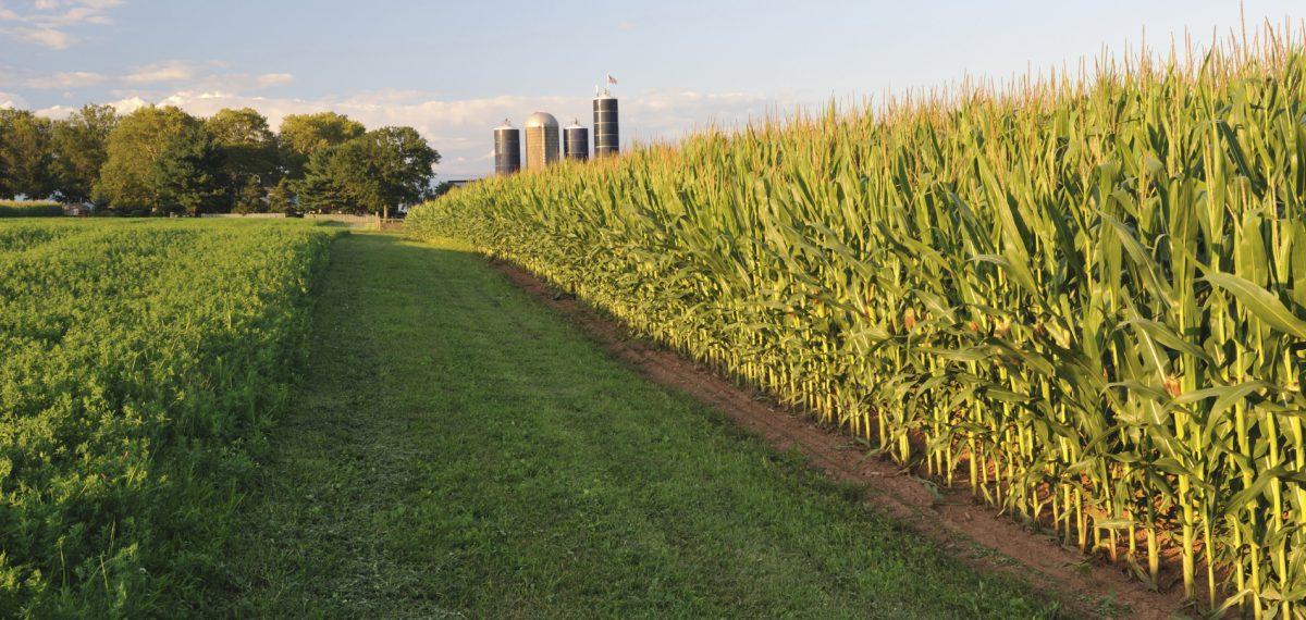 Como funciona o estimulante agrícola?
