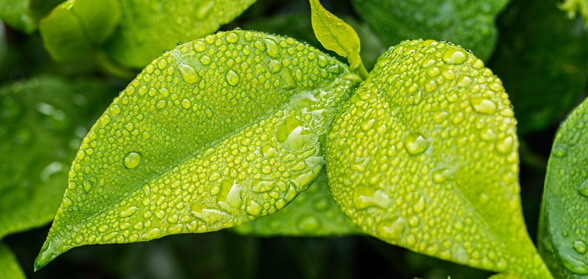 Por que o Startec é o adjuvante agrícola ideal para pulverização?