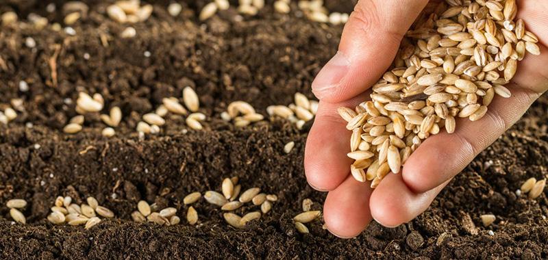 Como devem ser realizado o tratamento de sementes?
