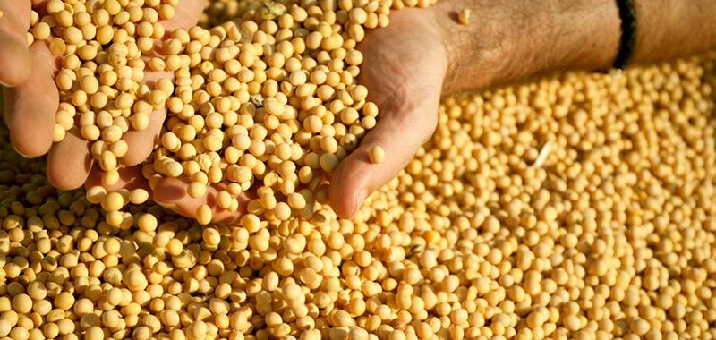 A importância do tratamento de sementes de soja