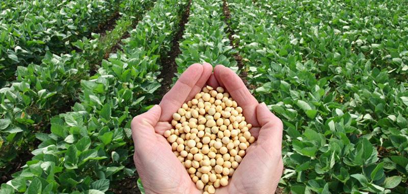 Produção de soja deve bater recordes nos próximos anos