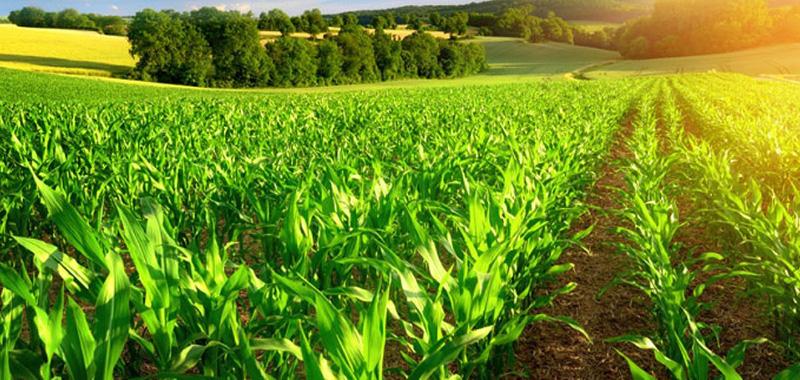 Para que serve um antiespumante agrícola?