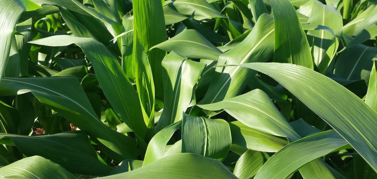 Como funciona o ativador agrícola?