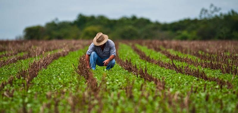 O que é um ativador agrícola?