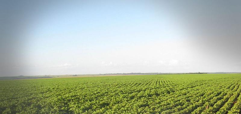 Boas práticas agropecuárias: Confira aqui!