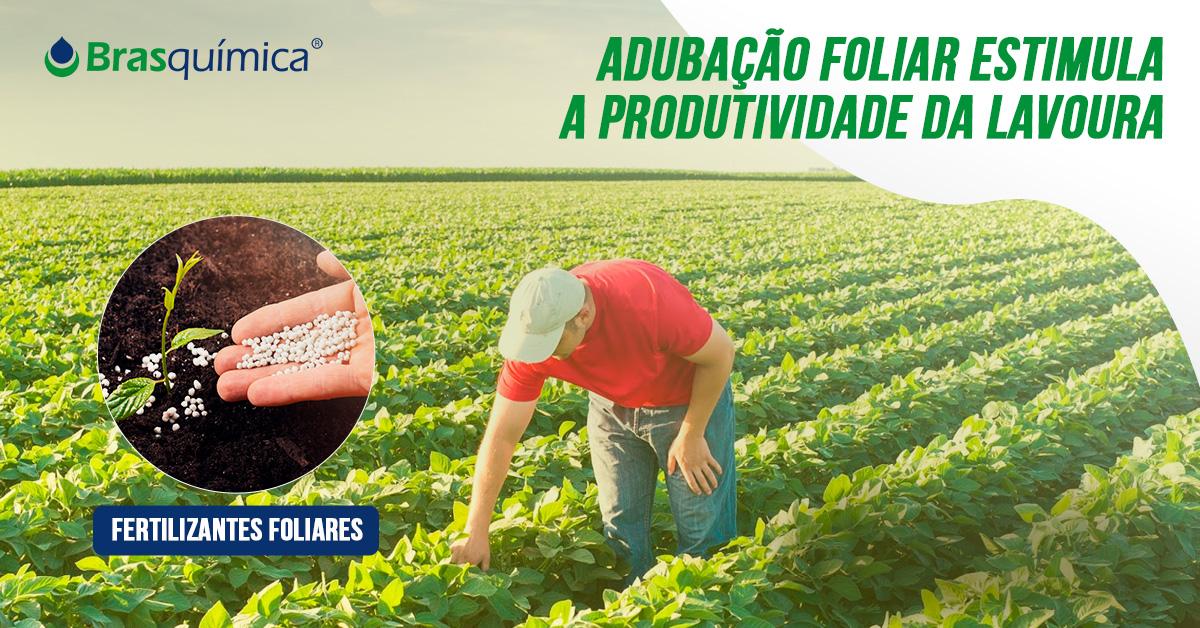 Adubação foliar estimula a produtividade da lavoura