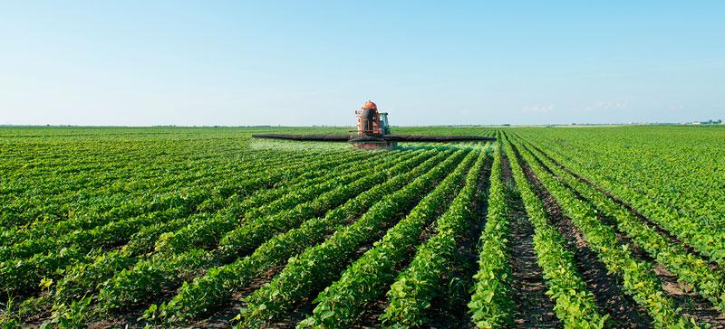 Quais os benefícios dos fertilizantes foliares?